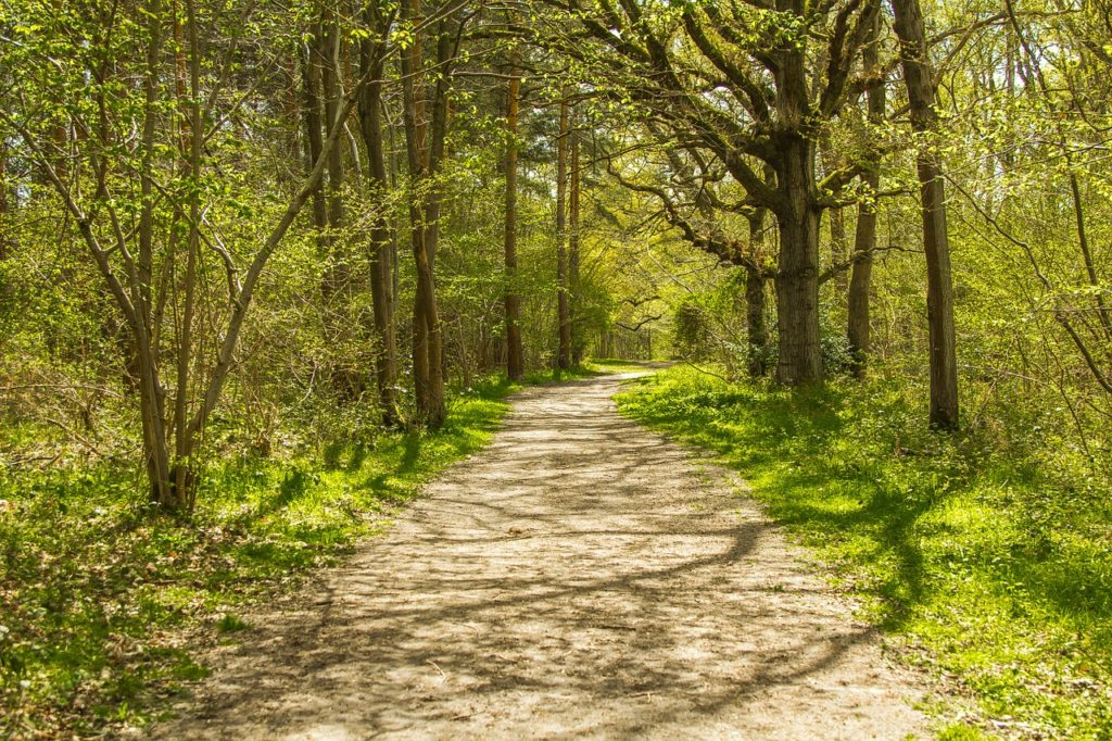 forest-road-1398227_1280